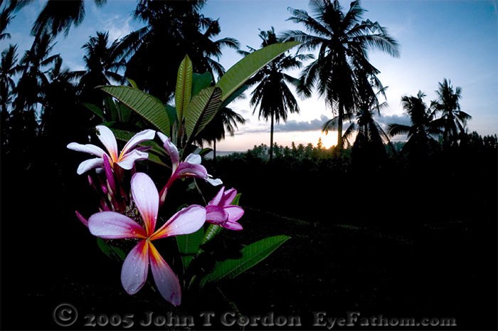 Eyefathom.com Photos - Kima Bajo Flowers at Sunrise