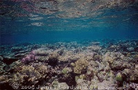 Thriving Shallow Reef PNG