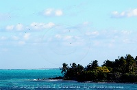 Birds over Half Moon Caye