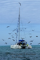 Catamaran and Flock