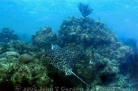 Eagle Ray climbing Wall