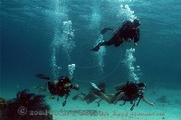 Diver Group