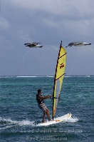 Sailboard and Seagulls