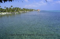 Ambergris Caye Shallow Reef