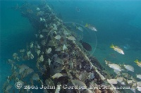 The Hesperus Wreck Bahamas
