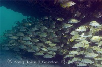 The Hesperus Wreck Bahamas 2