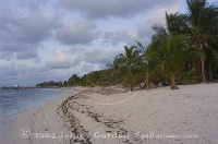 Beach at Little Cayman