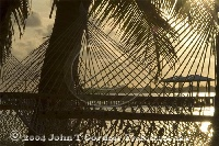 Hammock Sunrise Little Cayman