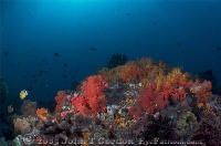 Soft Coral Panorama