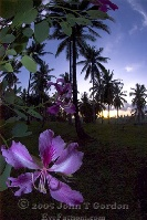 Orchid in Kima Bajo Sunrise