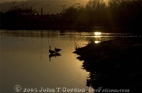 Canadian Geese in Sunset 2
