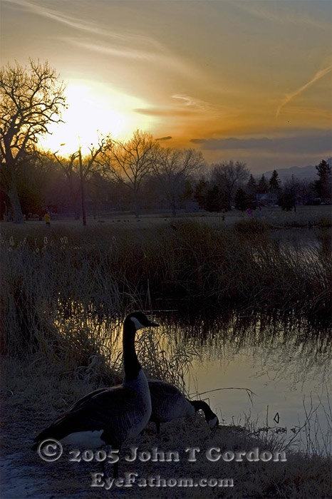 Eyefathom.com Photos - Canadian Geese in Sunset